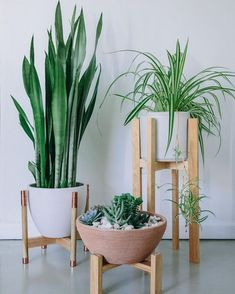 plant stand diy (plant satnd ideas) Tags: DIY plant stand, indoor plant s., plant stand diy (plant satnd ideas) Tags: DIY plant stand, indoor plant s. Wooden Plant Stands, Diy Plant Stand, Tall Plant Stand Indoor, Indoor Planters, Ceramic Planters, Plants Indoor, Indoor Gardening, Hanging Plants, Modern Planters