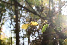 Feuilles d'automne by Julie Lafonte