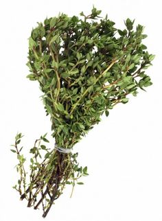 Storing Thyme – Drying Fresh Thyme After Harvesting Harvesting Thyme And How To Dry Thyme How To Dry Rosemary, How To Dry Oregano, Fresh Thyme, Fresh Herbs, Thyme Herb, Drying Oregano, Thyme Recipes, Bonsai, Gardens