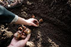 Blumenzwiebeln pflanzen Gardening, Archetypes, Blog, Ground Cover Plants, Shade Perennials, Planting Shrubs, Planting Bulbs, Lawn And Garden, Jungian Archetypes