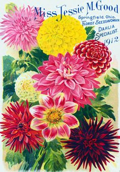 Heirloom dahlias, anyone? Great chat on that with Scott from Old House Gardens (and a giveaway).