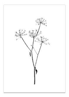 Image of September Flowers #5