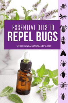 Top 10 Essential Oils That Repel Bugs + Bug Spray Recipe, Diffuser Blends, and more DIY Recipes to Naturally Keep Bugs Away - One Essential Community Essential Oil Bug Spray, Cinnamon Essential Oil, Citrus Essential Oil, Doterra Essential Oils, Essential Oil Diffuser, Essential Oil Blends, Essential Oil Ant Repellant, Bed Bugs Essential Oils, Essential Oils For Mosquitoes