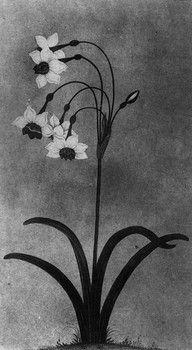 Jonquil - March birth flower