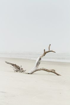 Little Tybee Island | Sundial Charters | Mermaid Cottages | Driftwood  For more cool travel stuff check out danteharker.com
