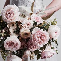 ♕ David Austin Keira, she's a beautiful rose , gorgeous @cathgratwicke