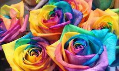 Радужная роза: изящный цветок | Flohouse