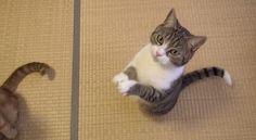 【動画】「おやつちょうだい!」可愛い猫のおねだりポーズ http://skaihahiroi.blog.fc2.com/blog-entry-933.html…