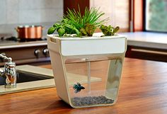 1000 images about ecosystem on pinterest fish tanks for Self sustaining fish tank