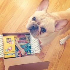 Bark Box!