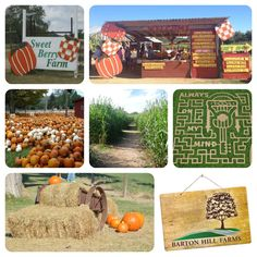 Favorite Fall Activities #1: Visit a Pumpkin Patch/Corn maze! We highly recommend Barton Hill Farms in Bastrop & Sweet Berry Farm in Marble Falls. Both are a short drive from Austin and offer pumpkin patches, mazes & other fun family activities.