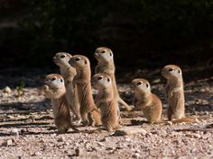 little cute ones!