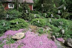 Kalliolle kukkivalle: Istuta unelmien kivikkopuutarha - Suomela - Jotta asuminen olisi mukavampaa Outdoor Decor, Garden, Outdoor, Stepping Stones, Front Yard, Garden Planning, Backyard
