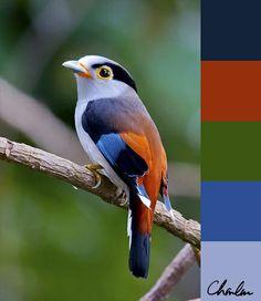 Nice colour palette on birdy!