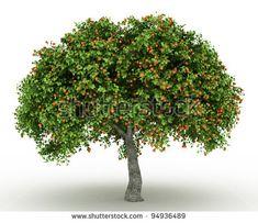 3d Rendered apricot tree full of apricots isolated over white – megvásárolhatja ezt az illusztrációt, és kereshet más képeket a Shutterstock alatt.