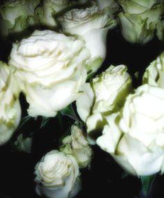 La Boutique del fiore -Monfalcone