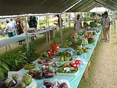 Agricultural Show - Поиск в Google