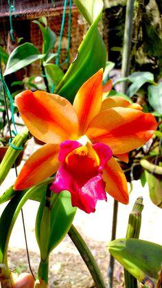 OrchidCraze: April 2012