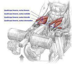Fitness Leg Extensions: 130-140-150lbs.
