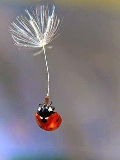 Creativity Design Art - Arte y diseño: Photomanipulation ladybug dandelion - Inspiration Photoshop