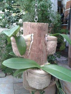 Suporte para orquídeas