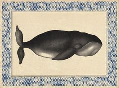 """The border on this """"Bowhead Whale"""" Card, by John Derian, Paperless Post would make cool #nail art look"""