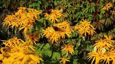 Kuvia neljästä vuodenajasta Butterflies, Flowers, Plants, Butterfly, Plant, Royal Icing Flowers, Flower, Florals, Floral