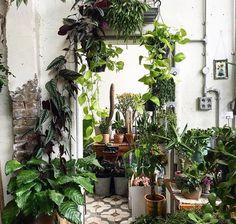 Je hebt urban jungle, en je hebt over de #top urban jungle. En dat ziet er zo uit!