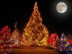 Árvore de Natal iluminada...