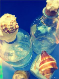 Glass bottles decorated with beachy sea shells DIY