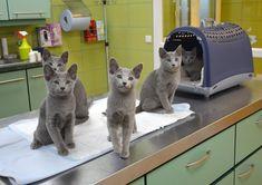 #Cats  #Cat  #Kittens  #Kitten  #Kitty  #Pets  #Pet  #Meow  #Moe  #CuteCats  #CuteCat #CuteKittens #CuteKitten #MeowMoe      Squad ...   https://www.meowmoe.com/58777/