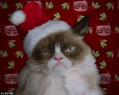 grumpy cat's owner   Not impressed: The first trailer for Grumpy Cat's Worst Christmas Ever ...