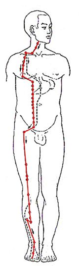 Stomach Meridian Flow - Stomach meridian path, acu pressure points and imbalances. verything you need to know to identify issues and heal this part of yourself #Stomach #Meridian #Healing #Bsync http://www.natural-health-zone.com/stomach-meridian.html