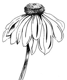 Precious Tips for Outdoor Gardens - Modern Ink Art, Line Art Drawings, Art Drawings, Drawings, Flower Drawing Tutorials, Flower Drawing, Art, Flower Sketches, Botanical Line Drawing
