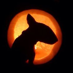 A friends Jack O' Lantern (carved the shape/image of her Bull Terrier puppy on the side. Awesome Job!
