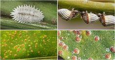 ¿Hart@ de ver cochinillas en tus plantas? ¡El artículo más completo!