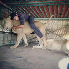 Riding your lion seems vaguely ill-advised and maybe not good for the lion… | The Rich Guys With Lions Of Instagram