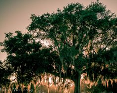 In this month's edition of the 10 on 10 Photography Circle, I take you on a tour of the Old Biloxi Cemetery for the 9th Annual Preserve Biloxi Cemetery Tour
