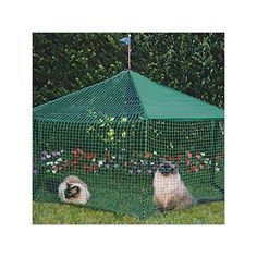Kittywalk Pet Gazebo -- You can find more details by visiting the image link.