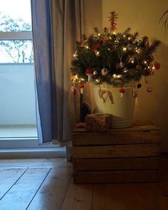 Hortenzie: Vánoční stromeček