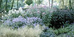 UTARMER SKVALLERKÅLEN: Stauder har vist seg å være gode i bekjempelsen av skvallerkål. Etter få år er skvallerkålen borte og staudene har tatt over blomsterbedet.