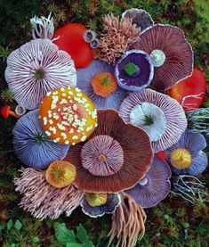 Magic of Nature: Magic Worlds of Jill Bliss, фото № 11 Mushroom Art, Mushroom Fungi, Felt Mushroom, Wild Mushrooms, Stuffed Mushrooms, Arte Peculiar, Plant Fungus, Patterns In Nature, Natural Forms