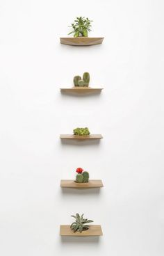 New York-based Furniture Designer Domenic Fiorello has presented the shelves of flowers in a series of Plant Pods. After careful study of the needs for car