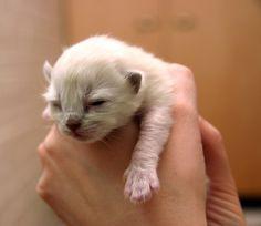 I'm Sleepy! | Cute Kitten, Sleeping Cat | Kitten | Cat Smirk