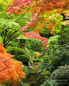 lots and lots of japanese maples over a simple stream and one well placed piece of garden art