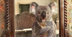 #TourismAus is the most popular #instagram kid on the block! #Australia #MostPopular #business