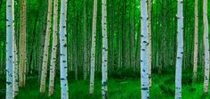 Photographed by Alain Thomas, the Aspens in the Springtime wall mural from Murals Your Way will add a distinctive touch to any room. Choose a pre-set size, or customize to your wall.