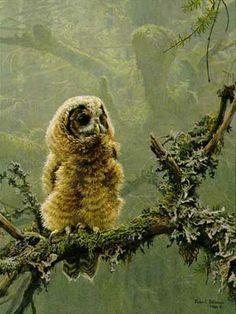 Robert Bateman- Continuing Generations-2- Spotted Owl