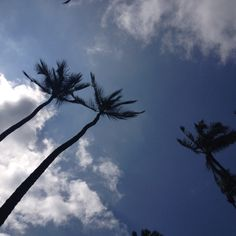 A Hawaiian sky