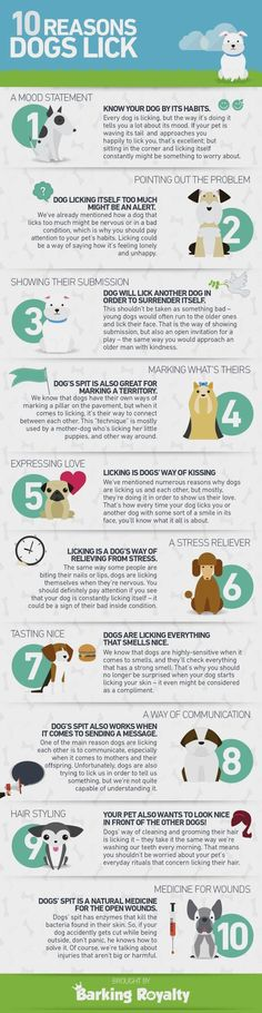 Best Dog Training - CLICK THE PICTURE for Various Dog Care and Training Ideas. 33689525 #dogtraining #dogobediencetraining